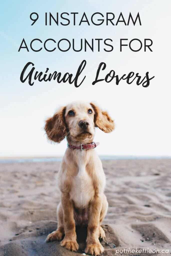 9 of the Cutest Instagram Accounts for Animal Lovers