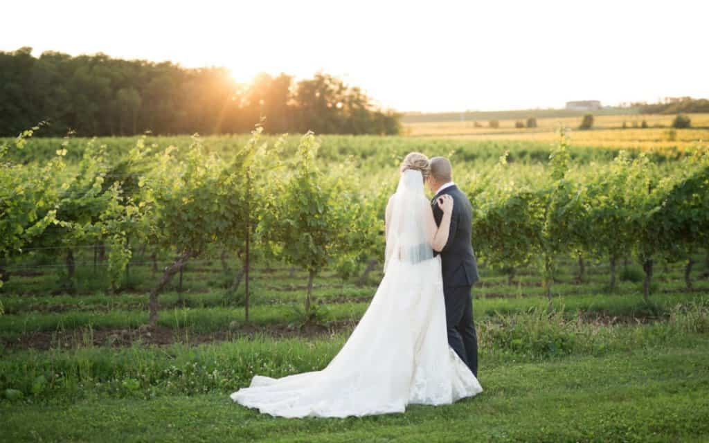 View of bride and groom from the back looking at a green field of grape vines - a beautiful view of a vineyard.